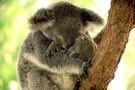 Australie - Melbourne, Circuit Australie + Pré-Tour Melbourne, Kangaroo Isl  ...