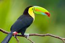 Costa Rica - San jose, Circuit Costa Rica entre Caraibes et Pacifique         3*