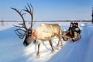 Finlande - Kittila, Hôtel Splendeurs de Laponie à l'hôtel Sirkantähti   -  SÉJOUR AVEC ACTIVITÉ :