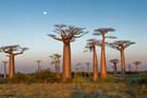 Madagascar - Antananarivo, Circuit Par la mythique route du sud + Extension bal  ...