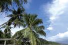Seychelles - Mahe, Combiné hôtels 2 iles : Mahé et Praslin : Hôtels Coc  ...