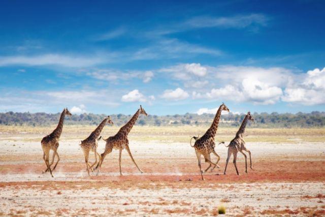 Circuit Afrique Du Sud Le Cap : Magie De Lu0027Afrique Du Sud, Chutes Victoria  Et Parc Chobe